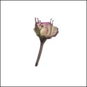 Rosebud with stem Light Pink