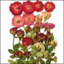 Mixed Rose Selection