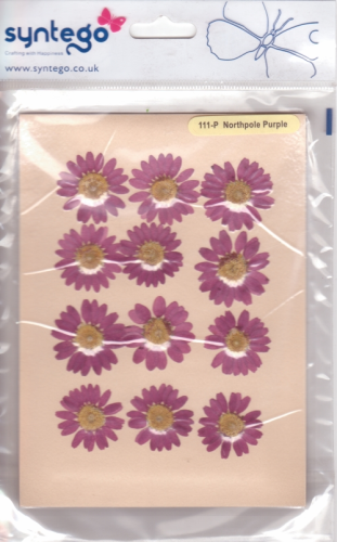 Syntego Northpole Daisies Purple