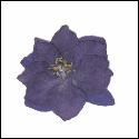 Larkspur Flowers Dark Blue