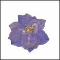 Larkspur Flowers Light Blue