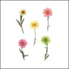 Assorted Colour Chrysanthemum